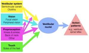 Equilibrium system, simplified.