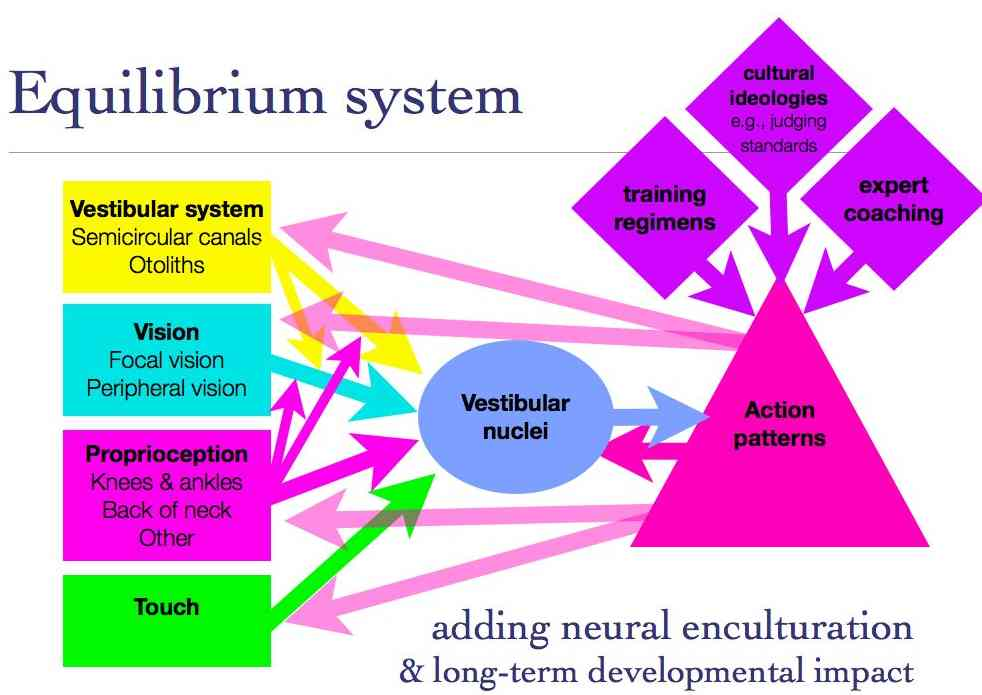 Pathophysiology Of Tonic Clonic Seizure likewise Diabetic Peripheral Neuropathy also Herbs Nervous System likewise Emerging Technologies 54168846 moreover Know Your Brain Orbitofrontal Cortex. on brain sensory system