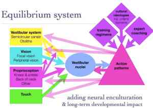 Expanded 'equilibrium system' showing channels for modification.