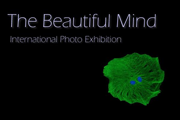 beautiful-mind-exhibit
