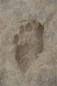 matthew-bennett-fossilized-footprint