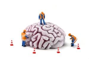 brain_construction1