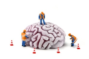 brain_construction1