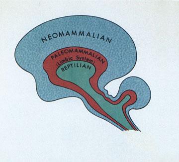 Triune Brain 2